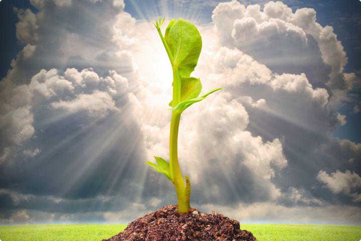 Klíčící semínko