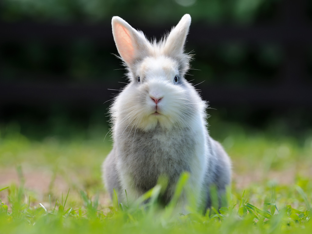 Cute Fluffy Rabbit
